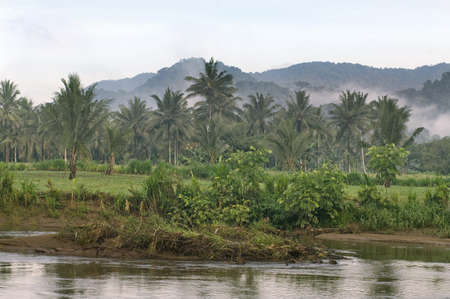 A tropical forest near river  photo
