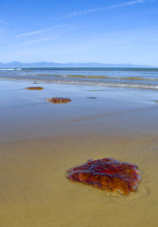 Red jellyfish on sand  Stock Photo - 9554910