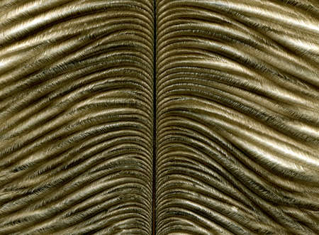 Close-up of feather on background. Macro  photo