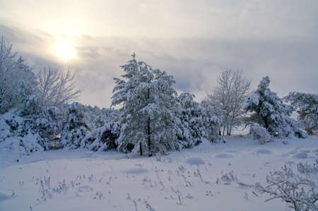 Beautiful winter forest landscape  photo
