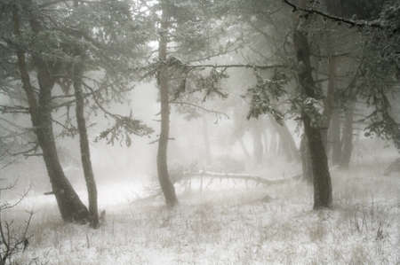 trees in fog in mountains Stock Photo - 11211520