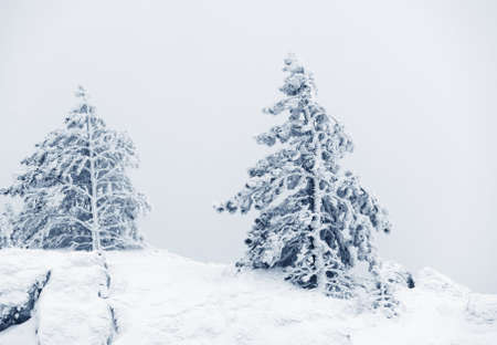winter landscape, forest covered by snow  photo