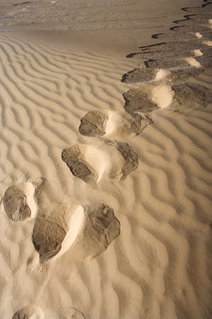 Footprints in the sand desert  photo