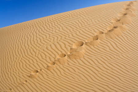 Human footprints on the yellow sand against the blue sky. Over horizont.  photo
