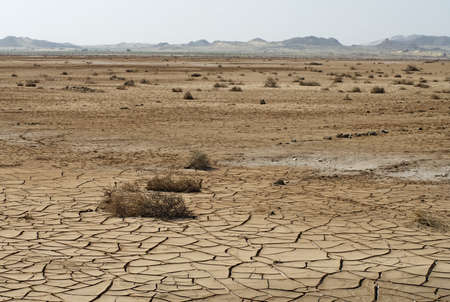 climate change: Dry cracked soil and plant in desert