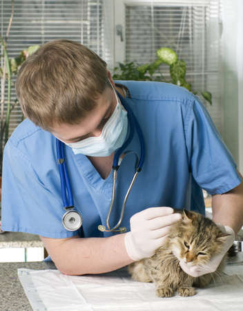Wounded cat treated by veterinarian  photo