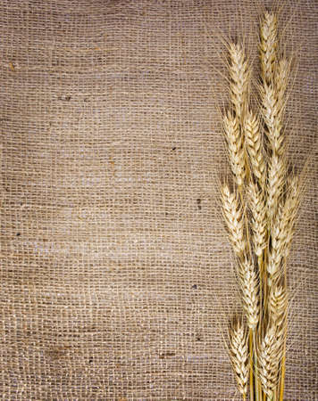 Wheat  over the canvas background,  写真素材