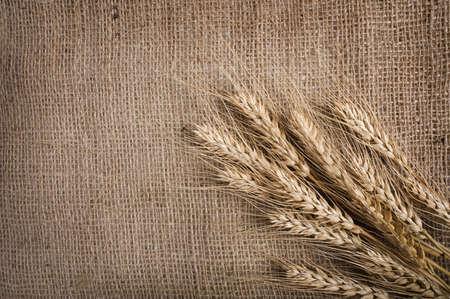 sacco juta: Di grano sullo sfondo tela,