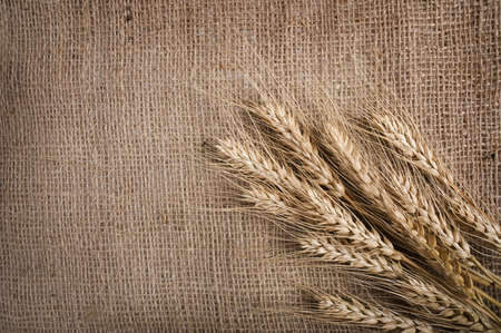 yellow flour: Wheat  over the canvas background,  Stock Photo