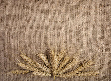 Wheat  over the canvas background,  photo
