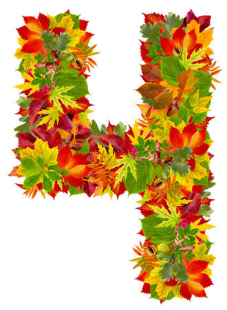 number 4 made from autumn leaves, isolated on white  photo