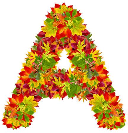 A, autumn alphabet isolated on white  Standard-Bild