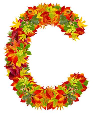 english oak: C, autumn alphabet isolated on white
