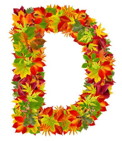 english oak: D, autumn alphabet isolated on white