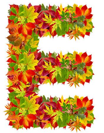 E は、白で隔離される秋のアルファベット