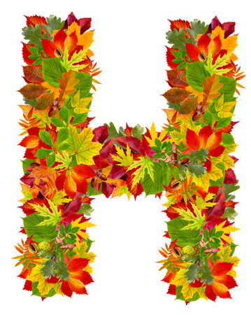 H, autumn alphabet isolated on white  photo