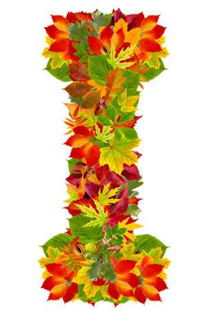 english oak: I, autumn alphabet isolated on white