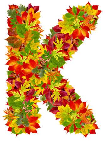 english oak: K, autumn alphabet isolated on white  Stock Photo