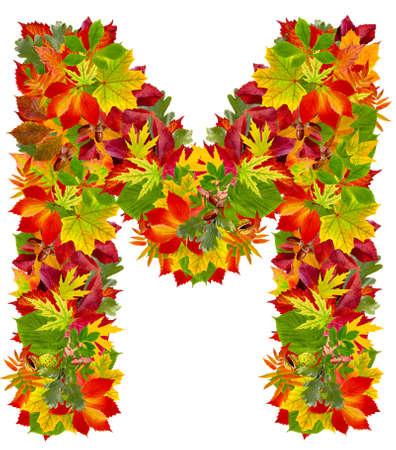 M、白で隔離される秋のアルファベット