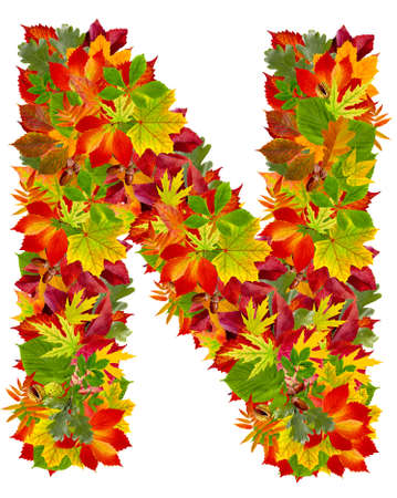 N, autumn alphabet isolated on white  photo