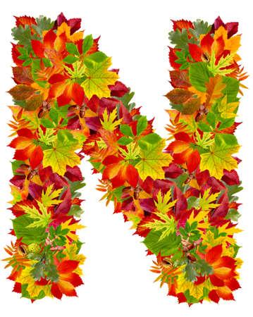 english oak: N, autumn alphabet isolated on white