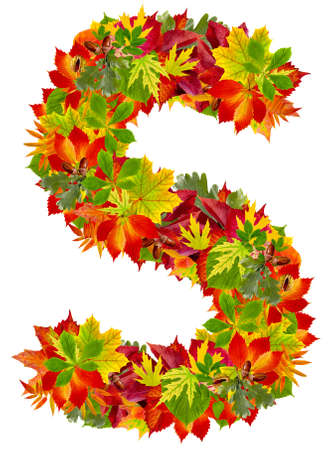 S, autumn alphabet isolated on white  photo