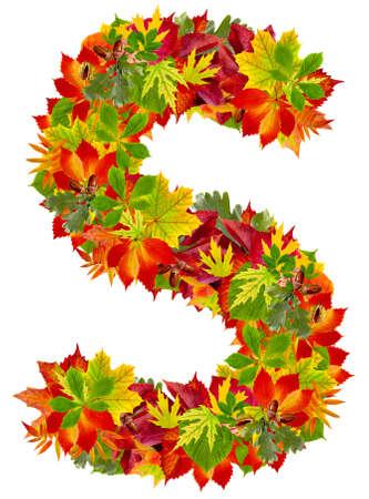 english oak: S, autumn alphabet isolated on white