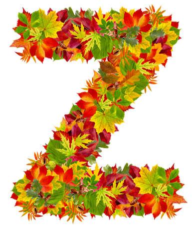 english oak: Z, autumn alphabet isolated on white