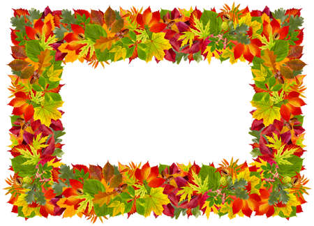 Autumn frame with  colorful leaves  photo