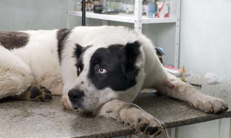 sick dog in a veterinary clinic photo