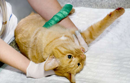 Wounded cat treated by veterinarians photo