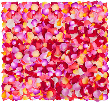 Background of fresh colorful flower petals  photo