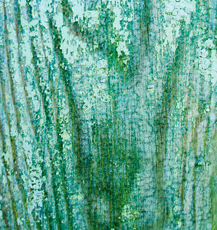spall: Old Wooden background  with cracked color paint
