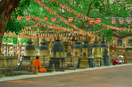 gaya: Buddhist monk  at Mahabodhi temple, Bodh Gaya, India.
