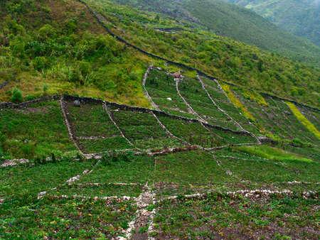 Nuova Guinea: Giardini in montagna a isola di Nuova Guinea