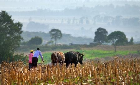 ELGON, KENYA -JANUARY 04 : Farmers plows  field on January 04, 2013  near Mount Elgon National Park.   Redactioneel