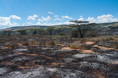 Wildfire in African savanna, Kenya  photo