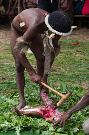 sektor: PAPUA PROVINCE, INDONESIA -DECEMBER 28: Unidentified warriors of a Papuan tribe use an earth oven method of cooking pig, at New Guinea Island, Indonesia on December 28, 2010
