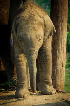 Elephant Breeding Centre in Chitwan, Nepal photo