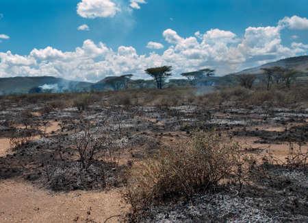 Wildfire in African savanna, Kenya  photo