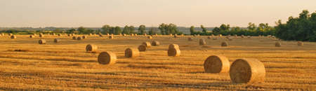 hayroll: hay-roll  in golden field landscape, panorama Stock Photo