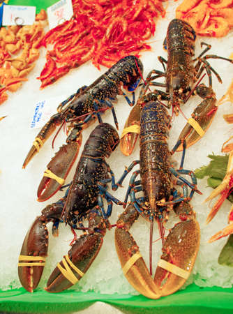 raw lobster: fresh  lobster at the market