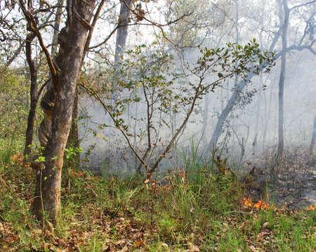 ネパール王国チトワン郡の山火事...