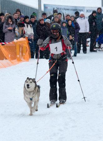 range of motion: Kharkiv, Ukraine-Feb 7, 2015: Sled Dog Race in Kharkiv, Ukraine Editorial