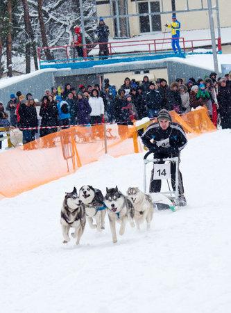 wintersport: Kharkiv, Ukraine-Feb 7, 2015: Sled Dog Race in Kharkiv, Ukraine Editorial