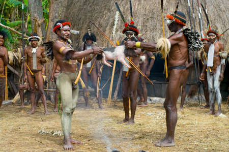 sektor: PAPUA PROVINCE, INDONESIA -DECEMBER 28: Unidentified warriors of a Papuan tribe use an earth oven method of cooking pig, at New Guinea Island, Indonesia on December 28, 2010 Editorial