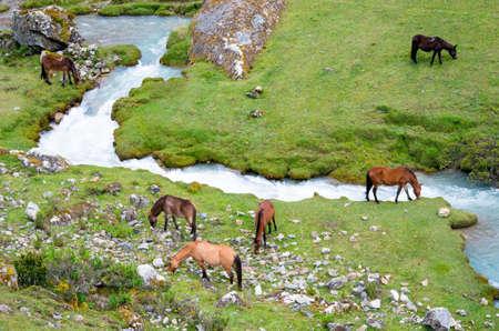 salkantay: landscape in Andes.  Salkantay Trekking, Peru.