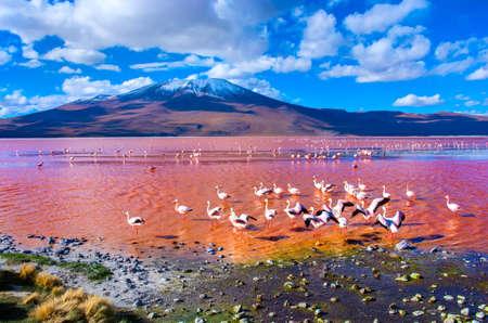 bolivia: Flamingoes in Laguna Colorada , Uyuni, Bolivia Stock Photo