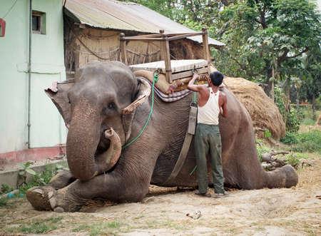 wade: CHITWAN, NEPAL - MARCH 31: Elephant before elephant Safari in Chitwan on March 31, 2014 Chitwan national park, Nepal Stock Photo