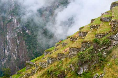 machu picchu: Lama in Machu Picchu in Peru.  Stock Photo